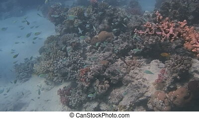 colorful red sea