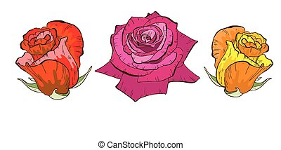 Colorful rose flowers isolated on white background. Floral vector.