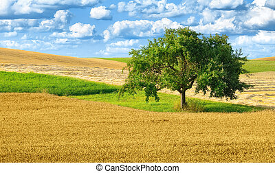 Colorful rural landscape with single tree