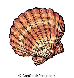 Colorful saltwater scallop sea shell, isolated sketch style vector illustration