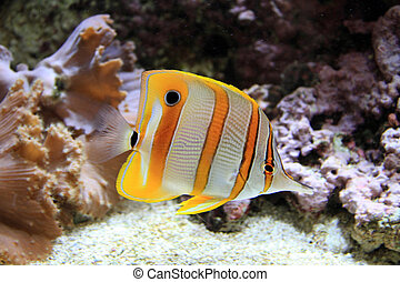 Beautiful saltwater aquarium, with colorful fish swimming by