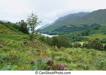 colorful Scottish Highlands - beautiful overgrown Scottish...