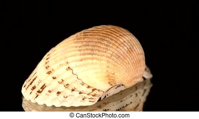 Colorful sea shell isolated on a black, rotation