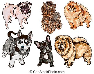 Vector set of colorful illustrations with dogs of different breeds