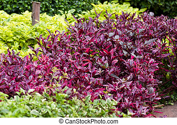 Multi-colored shrubs in the park, contrasting colors.