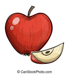 Colorful sketch of apple on a white background