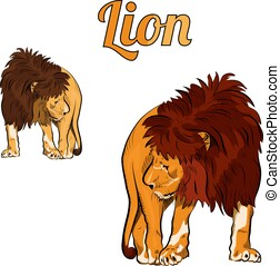 Colorful sketch of lion.