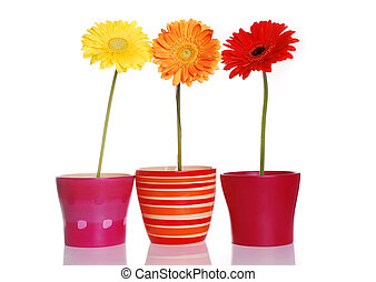 Colorful spring flowers in ceramic containers