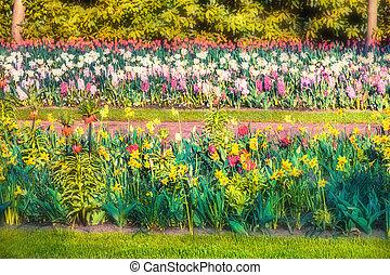 Colorful spring flowers in the Keukenhof park