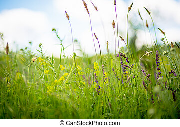 Colorful spring flowers in the meadow on blurred background