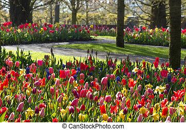 Colorful spring garden in april