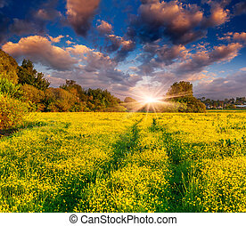 Colorful spring landscape on the meadow of yellow flowers