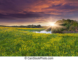 Colorful spring landscape on the siver with field of yellow flowers. Dramatic sunset.