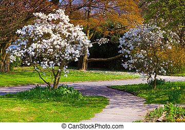 Colorful spring morning in the botanical garden of Essen town
