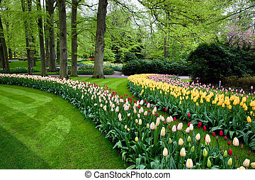 Colorful spring summer park, tulip flowers