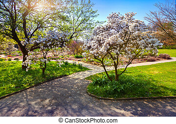 Colorful spring sunrise in the botanical garden of Essen town