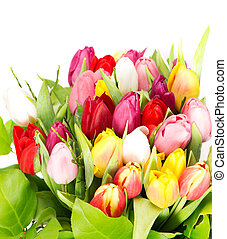 colorful spring tulip flowers