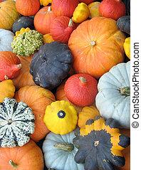 Colorful squash collection (Autumn 2008, Juckerfarmart, ...