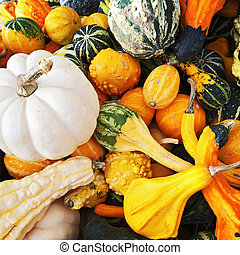 Colorful squashes and gourds
