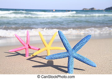 Colorful starfish on the beach at summer