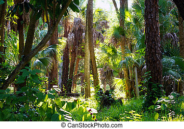 colorful subtropical forest morning