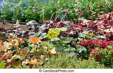 Colorful summer garden