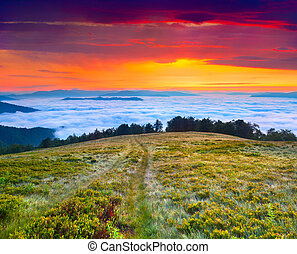 Colorful summer landscape in the Carpathian mountains....