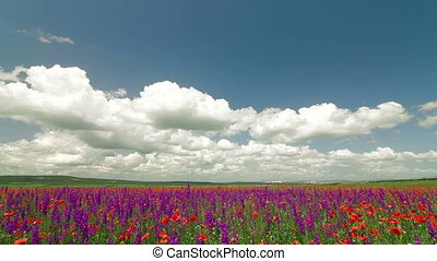 Colorful summer landscape with blooming meadow and fluffy clouds in the sky