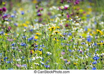 Colorful summer meadow with wild flowers