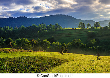 colorful summer morning in mountains - yellow farm field...