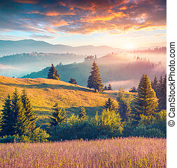 Colorful summer morning in the Carpathian mountains....