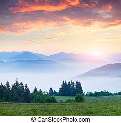 Colorful summer morning in the foggy Carpathian mountains....