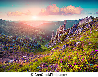 Colorful summer sunrise in the Carpathian mountains....