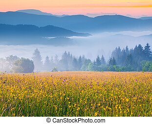 Colorful summer sunrise in the foggy Carpathian mountains