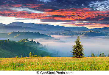 Colorful summer sunrise in the mountains.