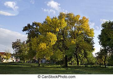 Colorful sunlit autumn trees