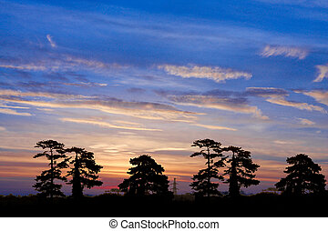 Colorful  sunrise with trees silhouette