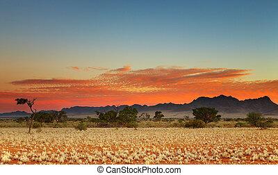 Kalahari Desert - Colorful sunset in Kalahari Desert,...