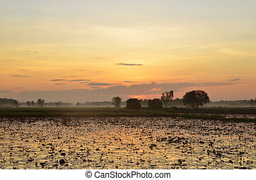 colorful sunset over a wetland, with some wheats in the foreground