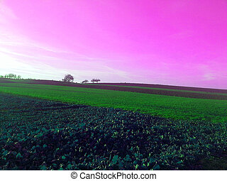 Colorful sunset over fields