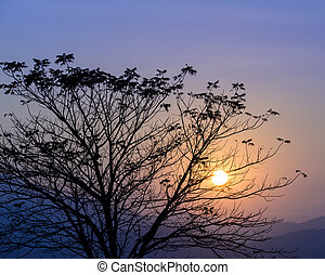Colorful sunset with silhouette tree