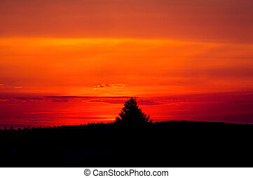Colorful sunset with tree silhouette.