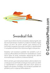 Colorful Swordtail Fish Isolated on White Graphic