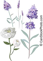 colorful tender hand drawn flowers vector lavender and peony...