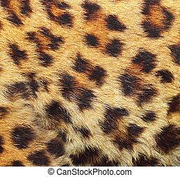 texture of leopard fur