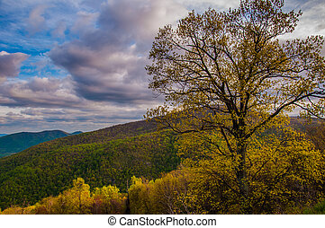 Colorful tree on Skyline Drive in Shenandoah National Park,...