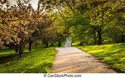 Colorful trees along a trail at Druid Hill Park in Baltimore, Ma