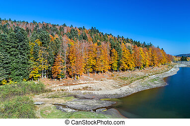 Colorful trees at the lakeside of Lac de la Lauch in the...