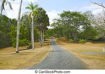 Colorful trees by the road in Panama during autumn time