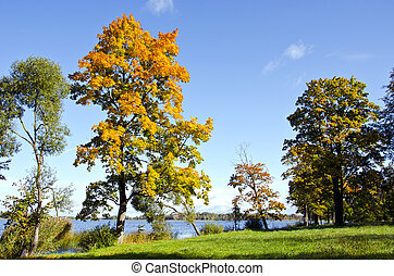 Colorful trees early autumn lake backdrop blue sky